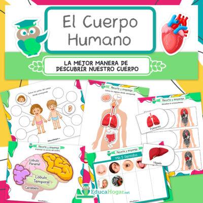 Aprender sobre el cuerpo humano